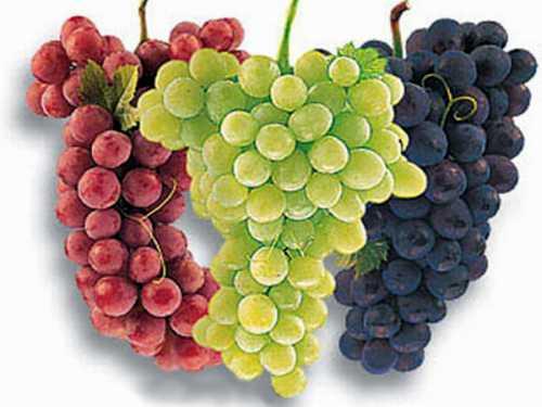Сами по себе натуральные ягоды улучшают пищеварение и обмен веществ, а значит, заставляют наш организм активнее расщеплять все, что мы едим