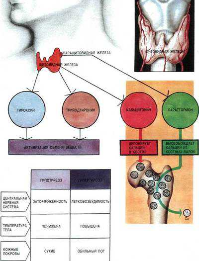 Обмен веществ в организме человека