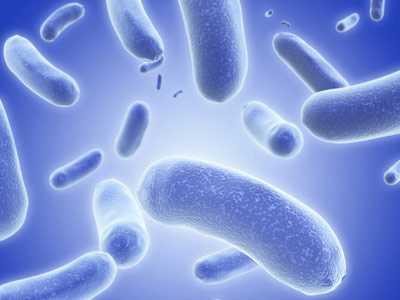 Но для жизнедеятельности клеток в организм должно поступать питание