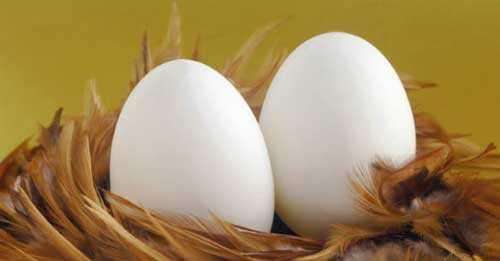 К чему снится много яиц: толкование сна про яйца: