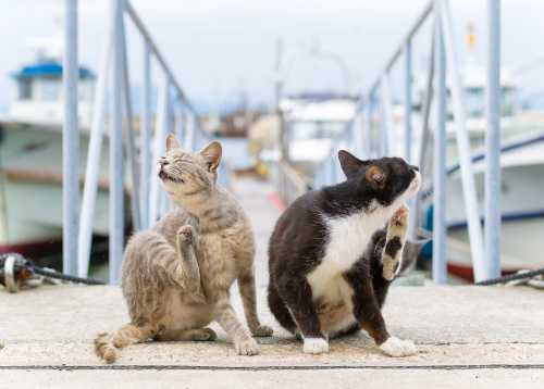 Опасны ли кошки беременным