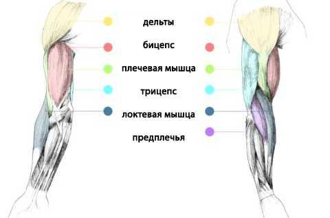 Как накачать мышцы рук в домашних условиях