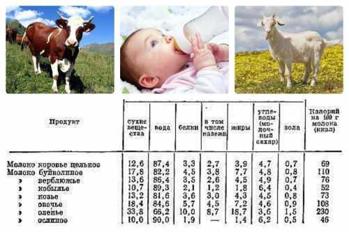 Таким образом, можно сделать вывод, что потребление молока животного происхождения детям до года в качестве основного питания не рекомендуется